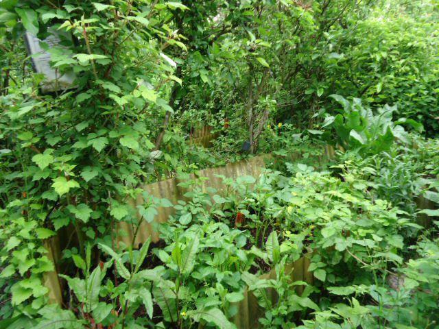 La jungle étroite à Mouscron