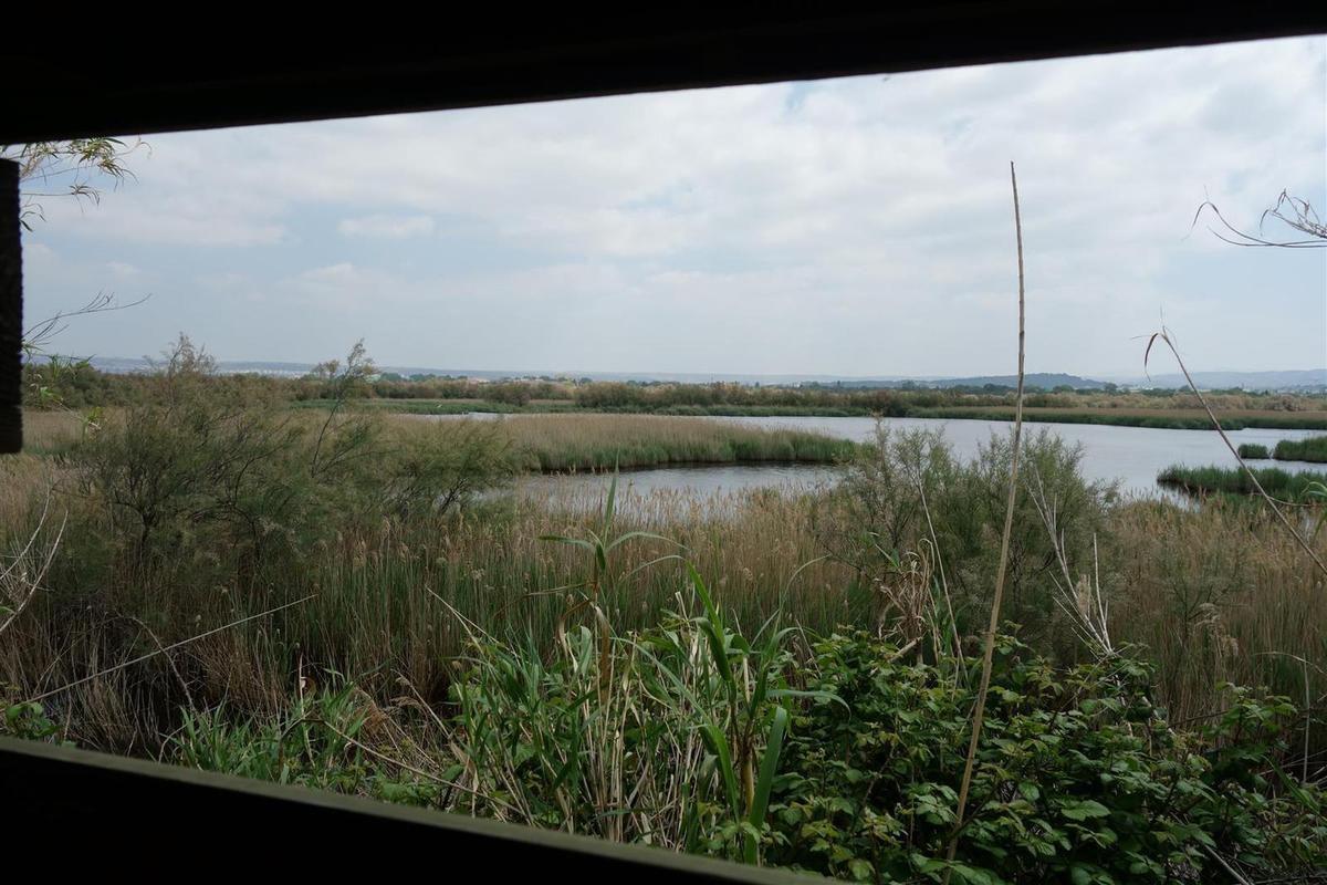 dans les observatoires ornithologiques, la Camargue... à Marignane !
