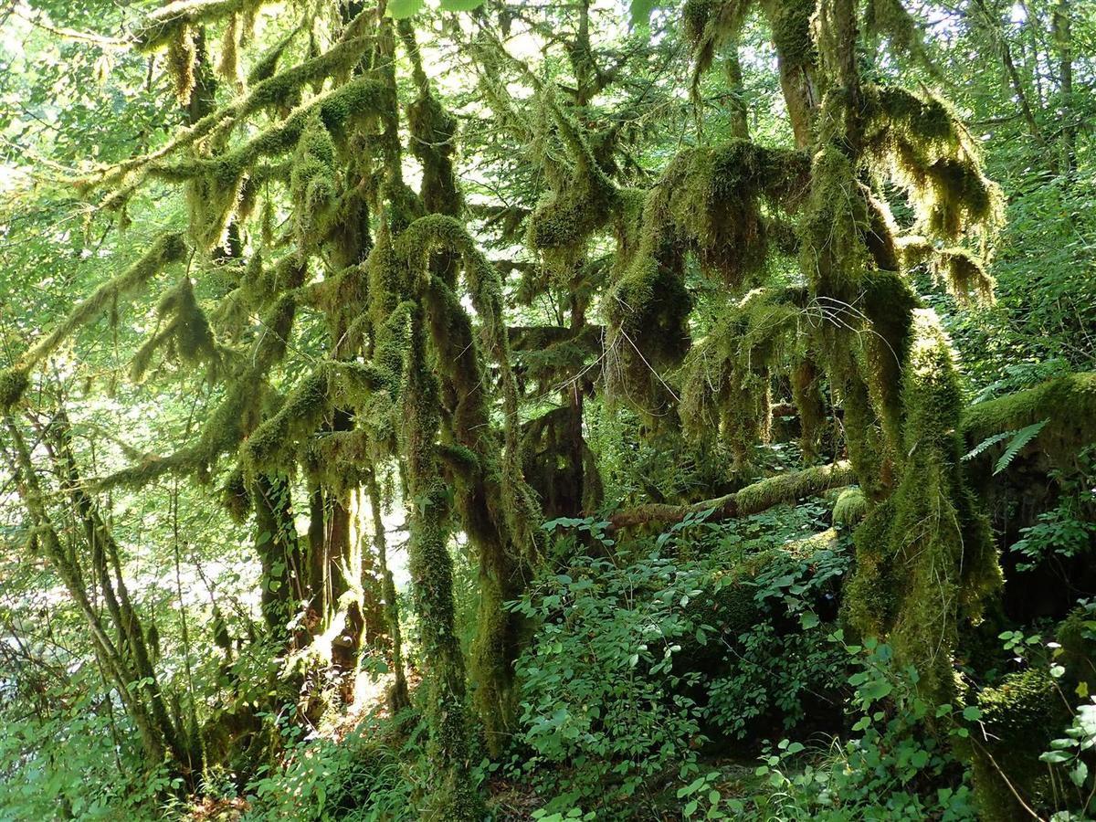 forêt de mousses à la sortie