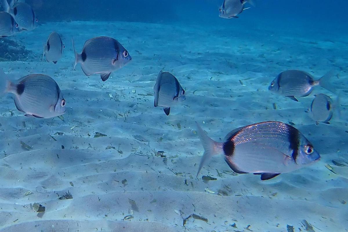 la plage de Monasterio : sur et sous la surface
