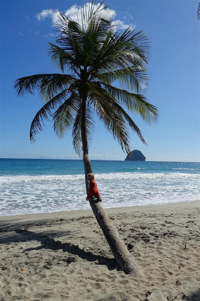 le 8 janvier :  sur la Grande Anse du Diamant puis au point de vue du Morne Larcher, vue sur le rocher du Diamant et l'île de Sainte-Lucie au sud, après une montée en mode sportif en 25 mn