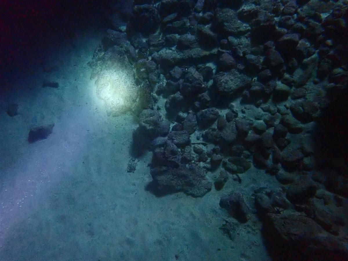 au fond de la cavité immergée, bébé seiche en cours d'enfouissement dans le sable, blennies et mini anémones