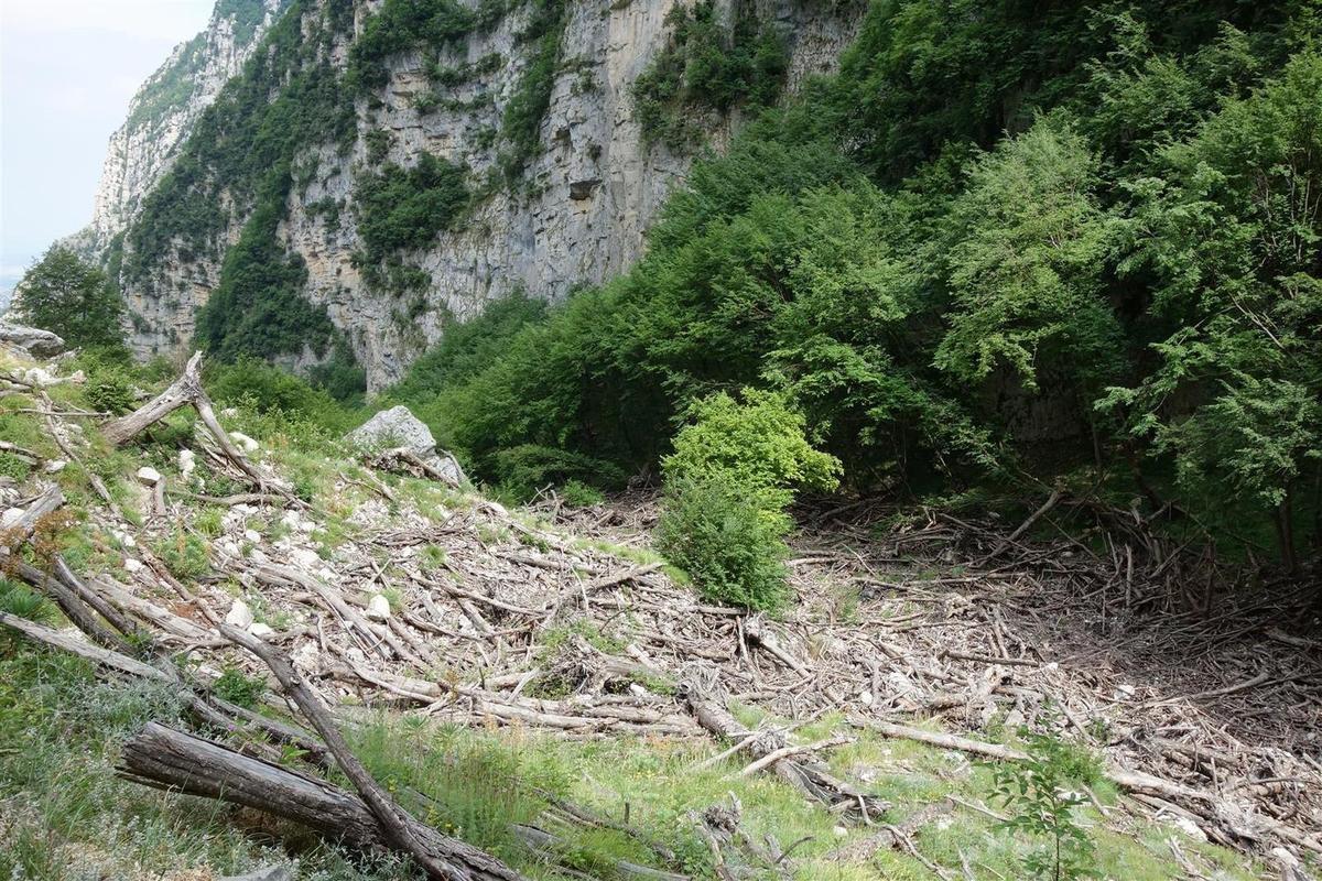 les stigmates d'avalanches en fond de vallon à moins de 1000 mètres