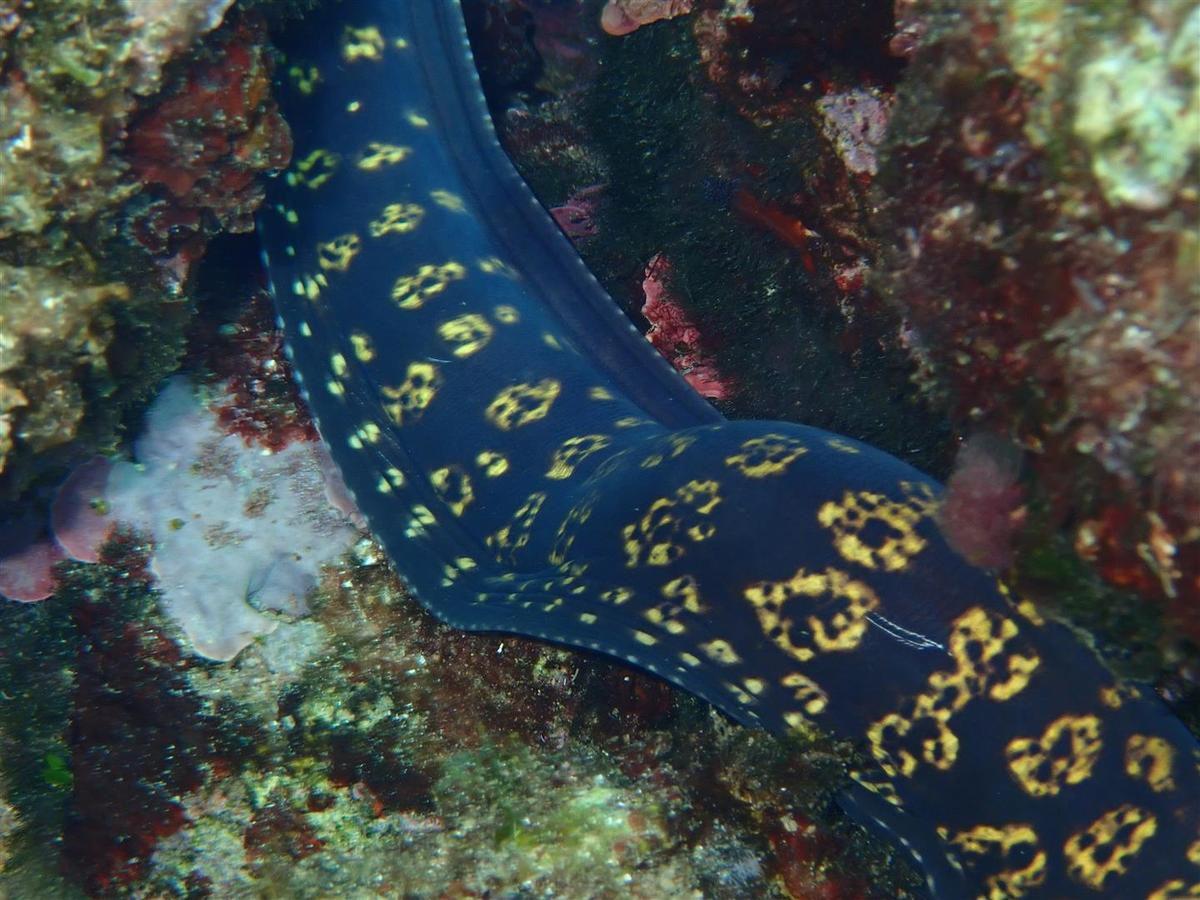 faune marine entre les Pointes Grenier et Fauconnière