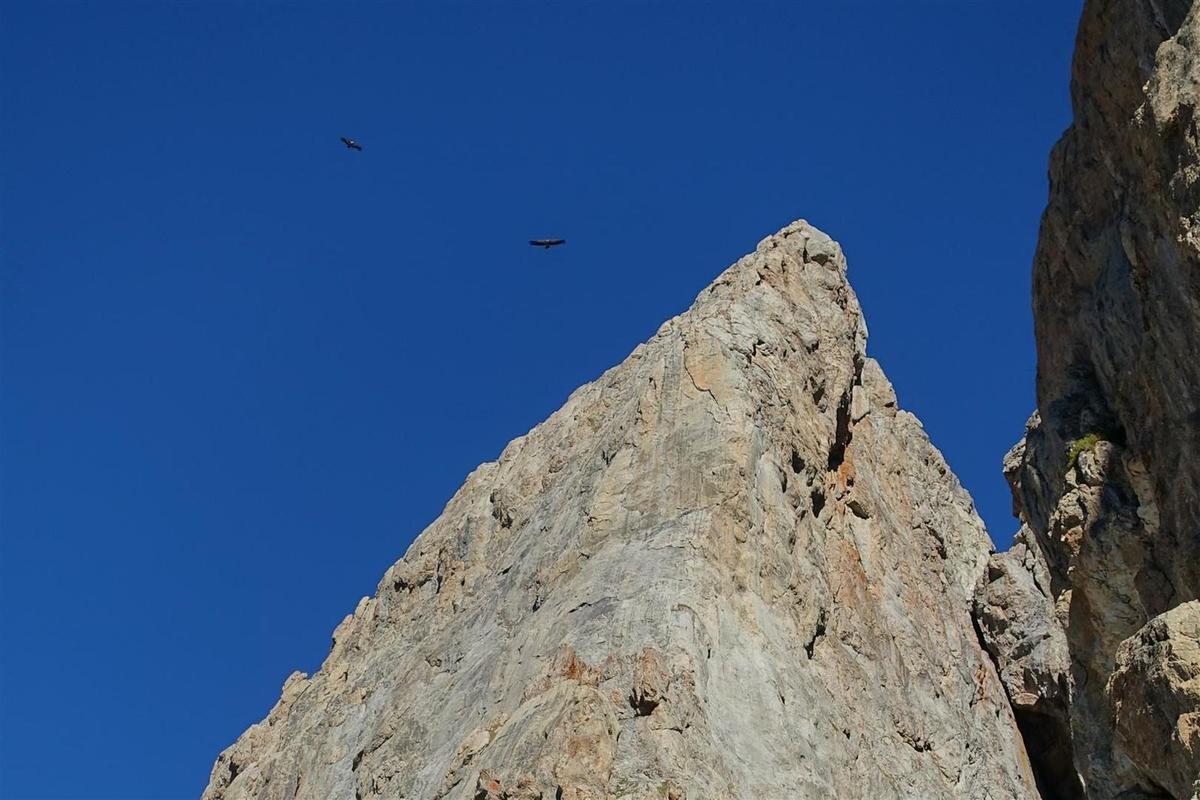 les vautours au-dessus des pitons rocheux