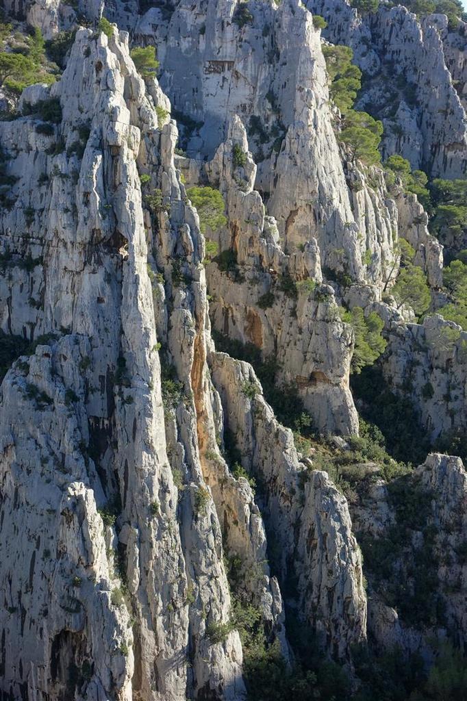 la forêt d'aiguilles d'En Vau depuis le Trou du Canon