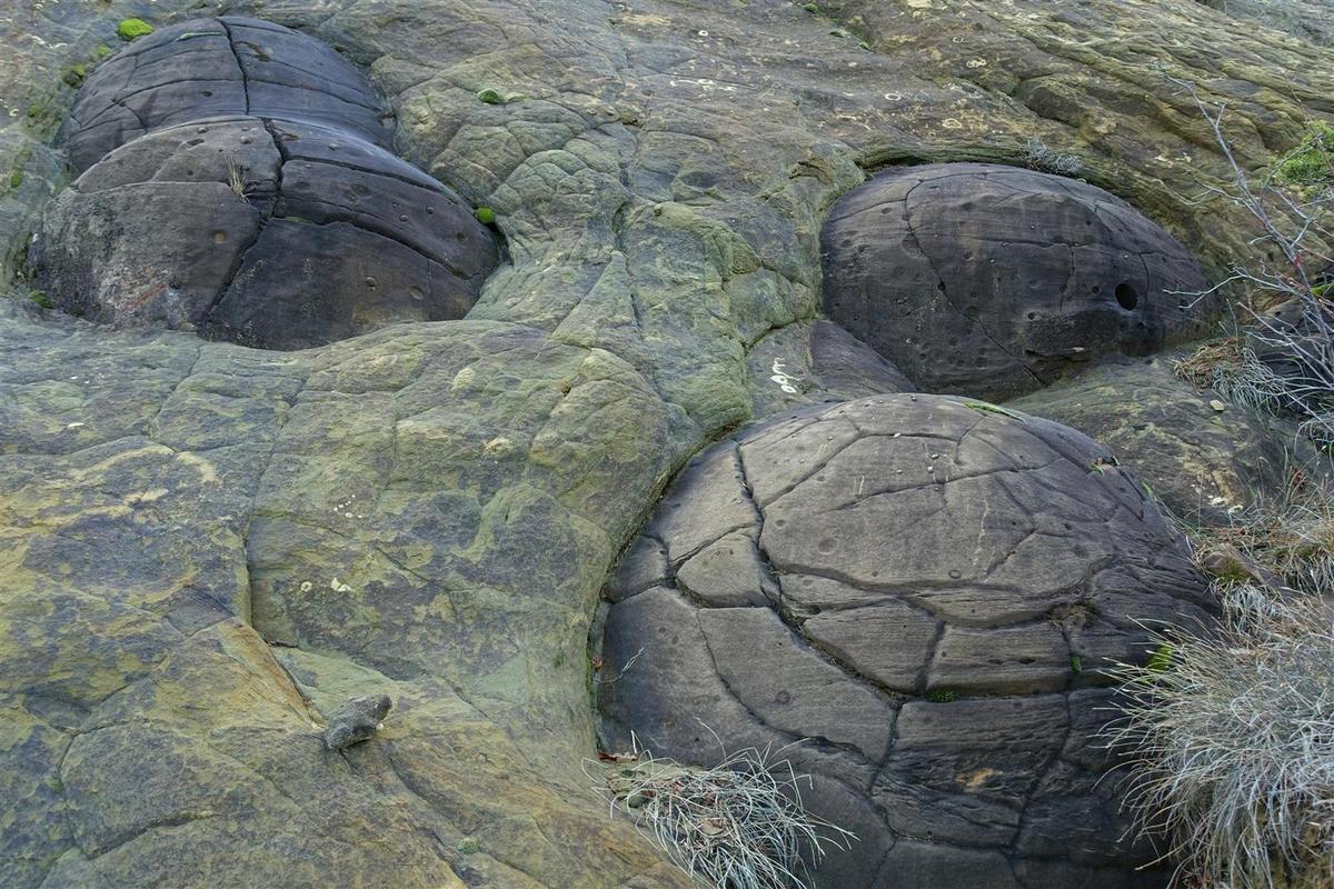 les plus beaux oeufs en contrebas des falaises est
