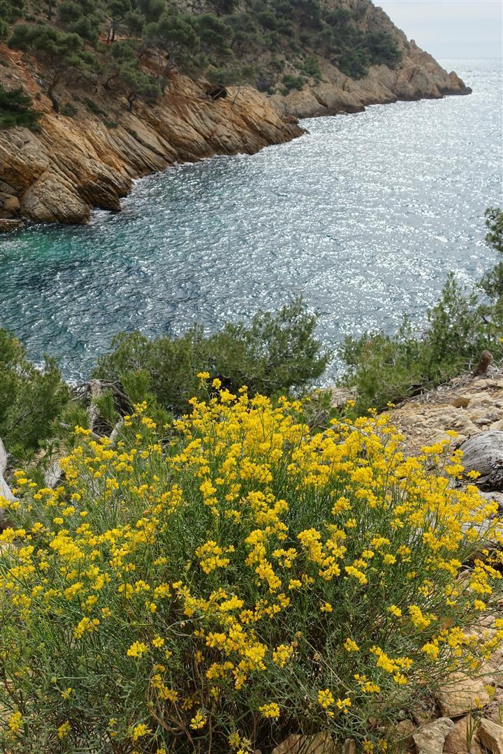 fleurs sauvages de la Provence littorale, dans l'ordre : coronille