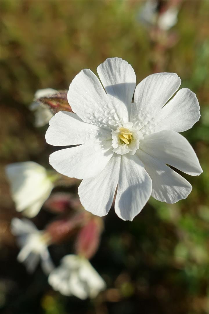2 jours plus tard, l'Erevine en bivouac, avec là encore une approche gourmande et fleurie