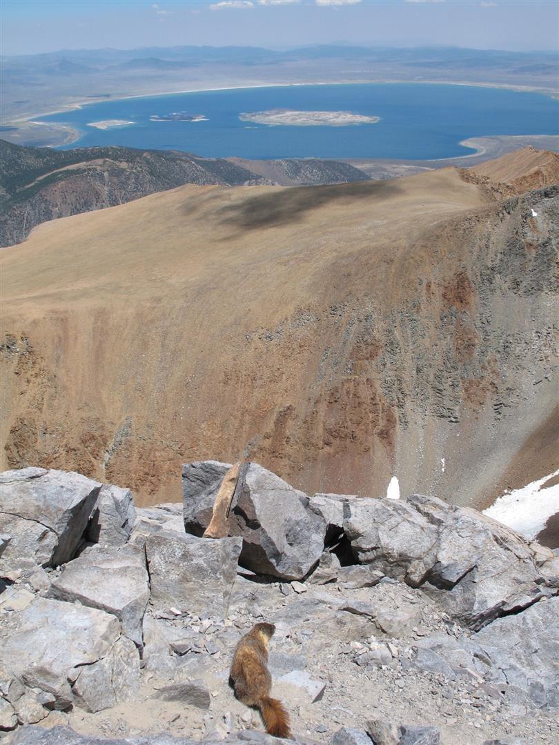 vue du sommet sur le lac Mono, une marmotte également en contemplation