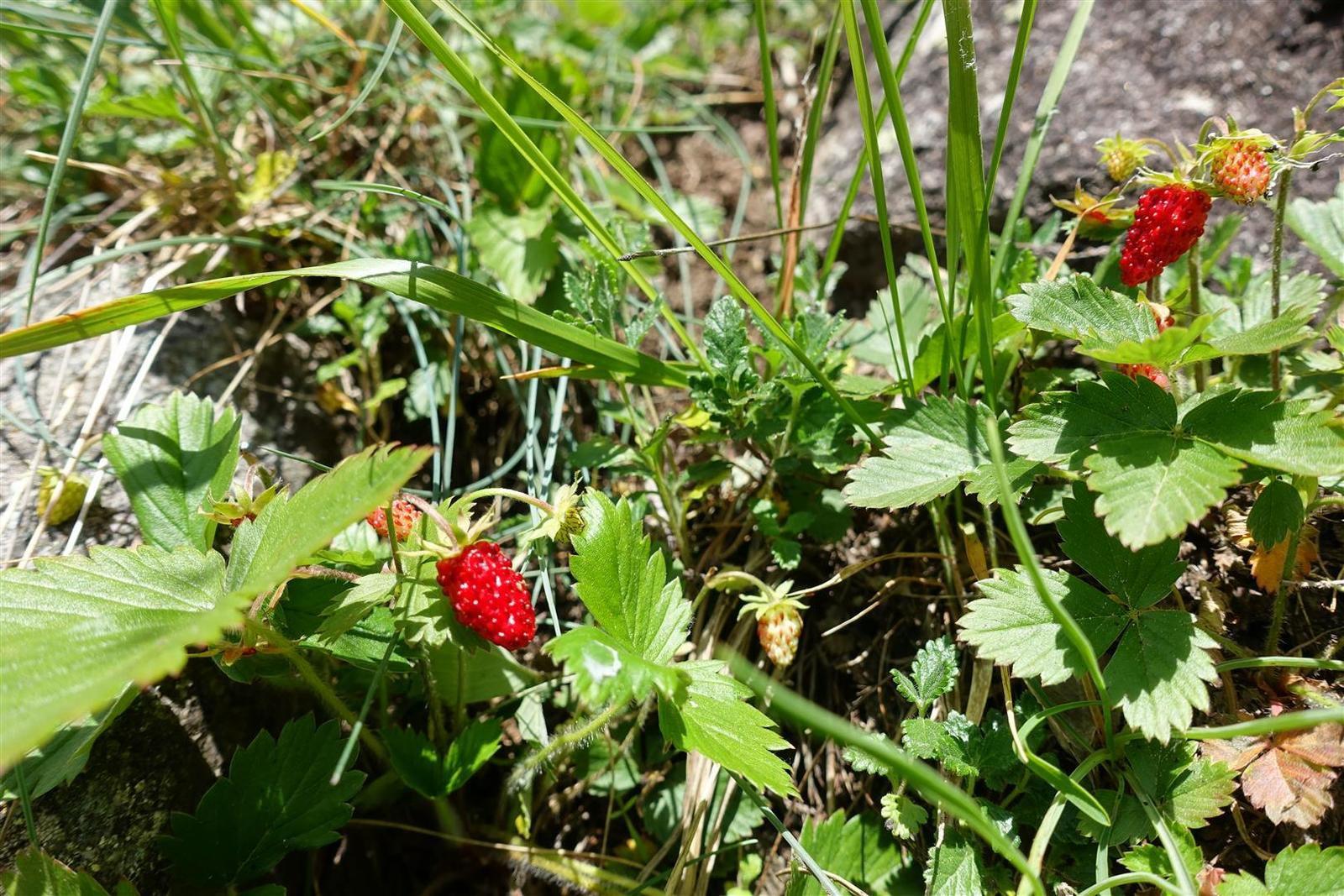 la flore au départ : du rouge, comestible ou non