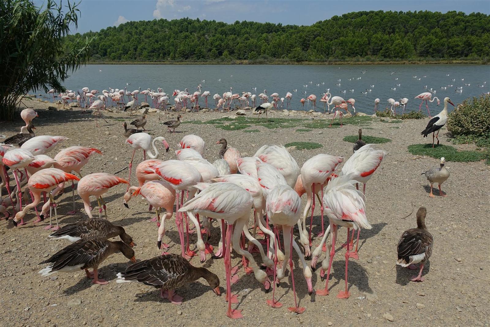 """avifaune provençale dans la réserve """"africaine"""" de Sigean quelques heures plus tôt"""