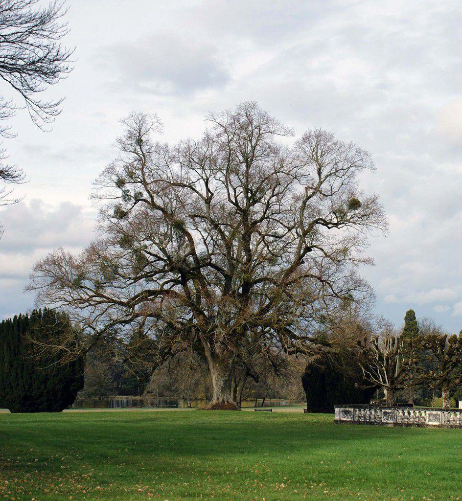 À l'université des arbres