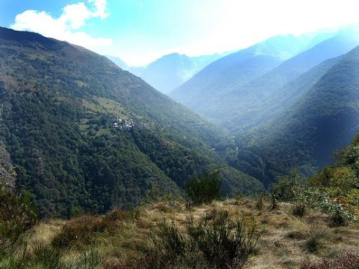 Forêt de Carlac