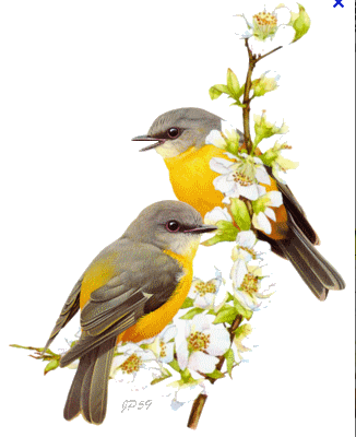 Oiseaux sur la branche...