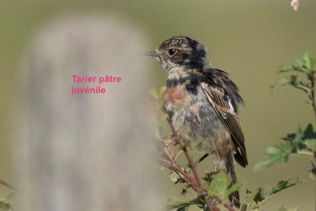 Photos Jean-paul Ladoux