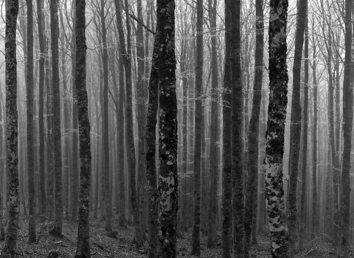 Dans la forêt de l'Aigoual