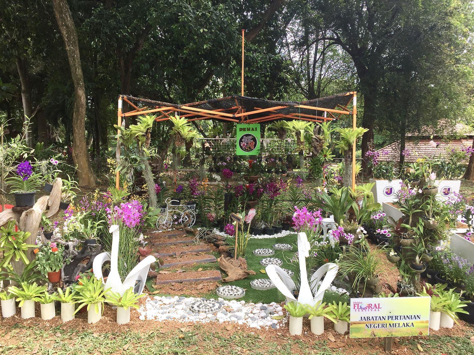 Arrivée, vues du site, enregistrement des plantes pour le concours