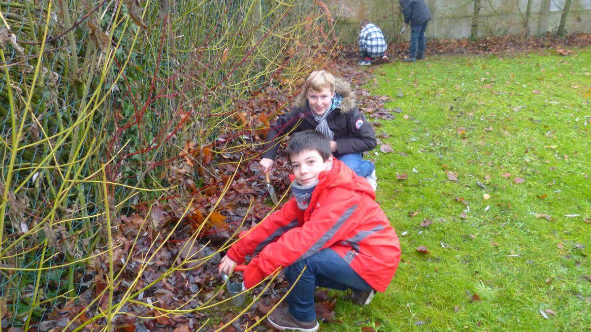 Projet jardin: plantation de bulbes de jonquilles