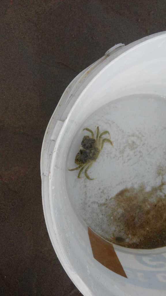 Oh! des crabes! Oh! une étoile de mer! Ouah!!!