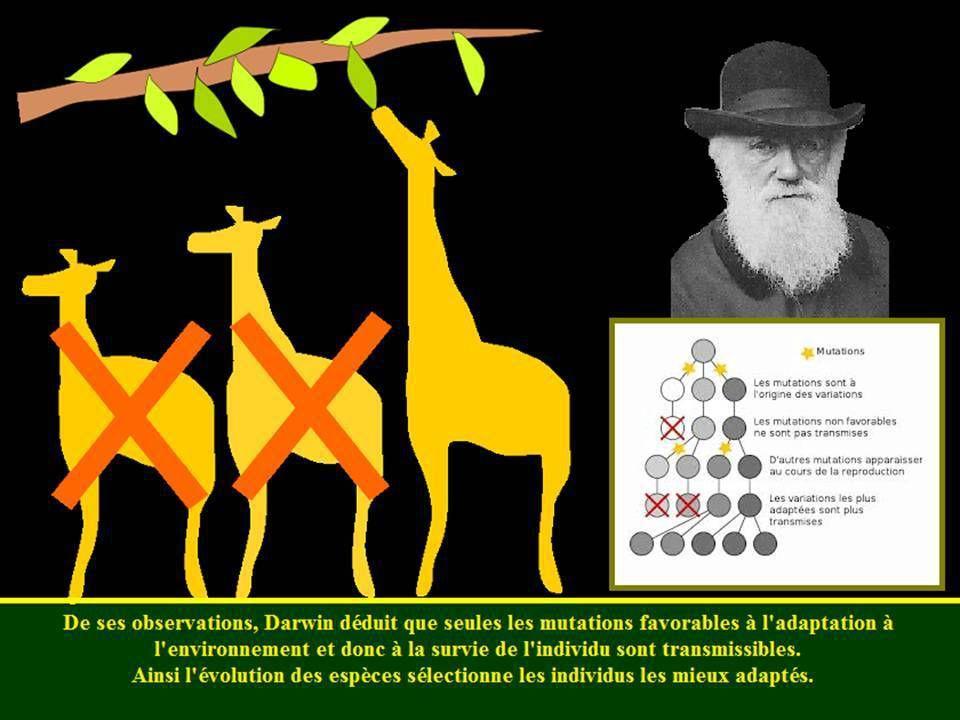 La génétique de Darwin à Mendel