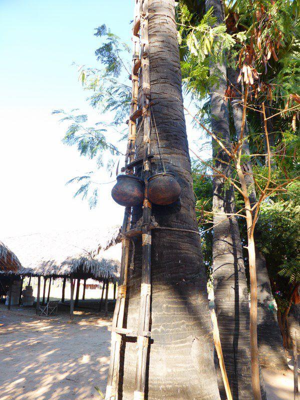 La fabrication des bonbons (et du vin, et de l'alcool) en sucre de palme