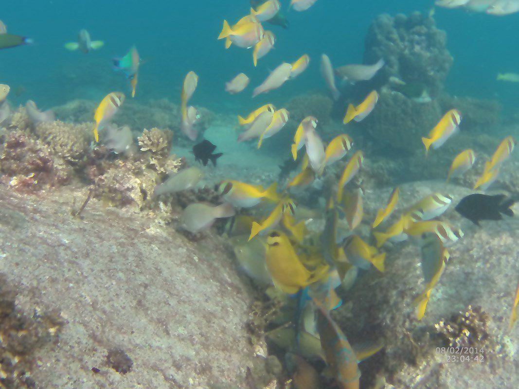 J37 – Lundi 6 février 2017 – Snorkeling à Koh Tao