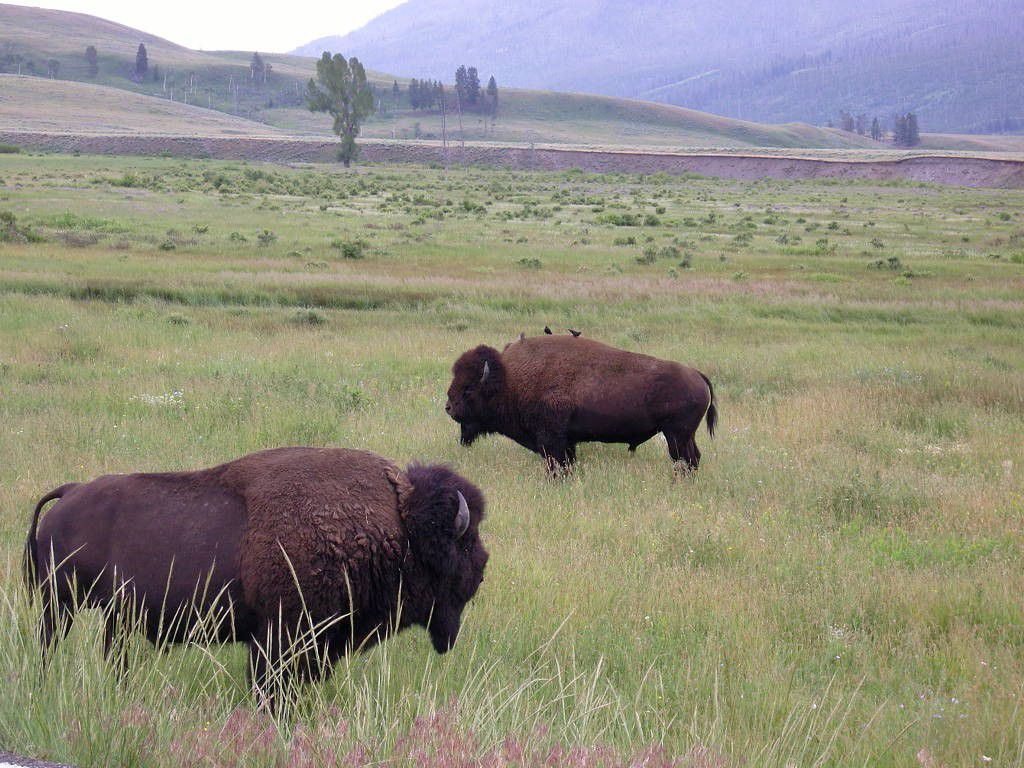 J4 - Yellowstone