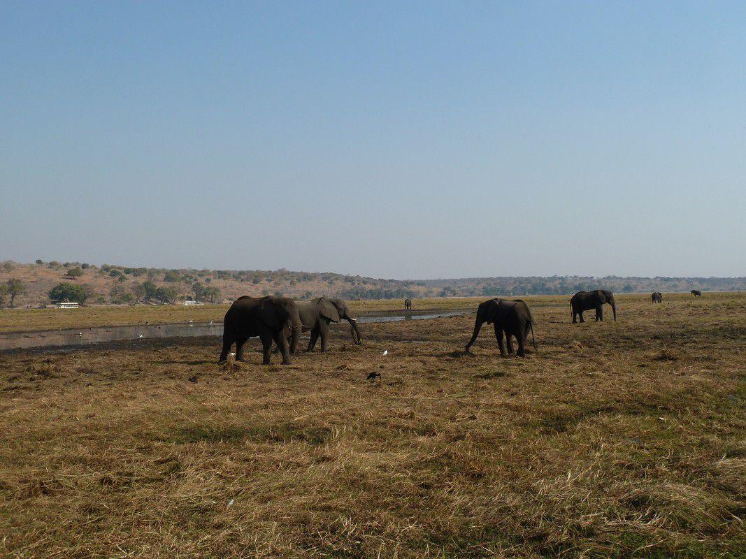 J30 Chobe River