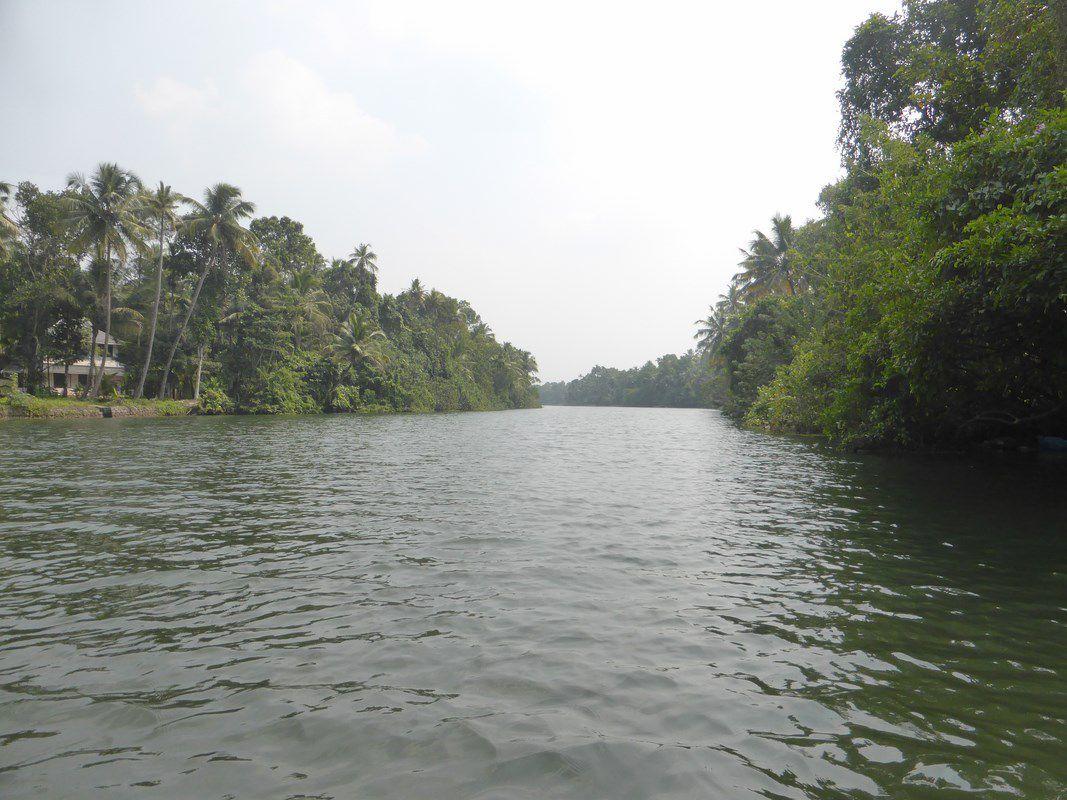 J16 - Kochi, les backwaters