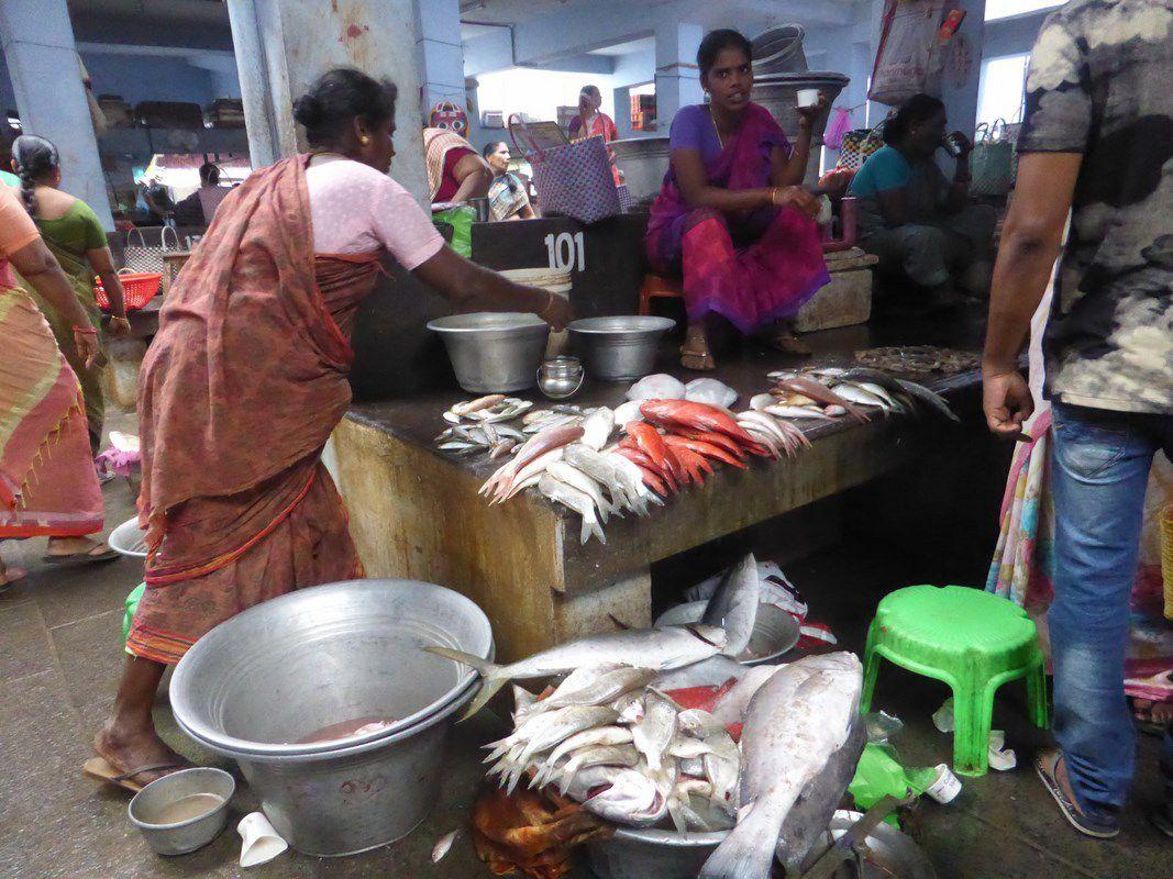 J20 - Pondichéry