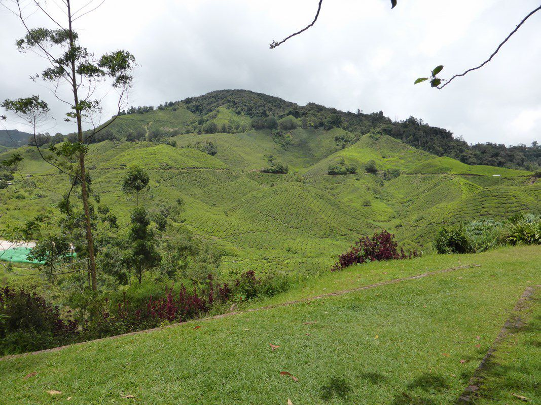 J4 - Cameron highlands