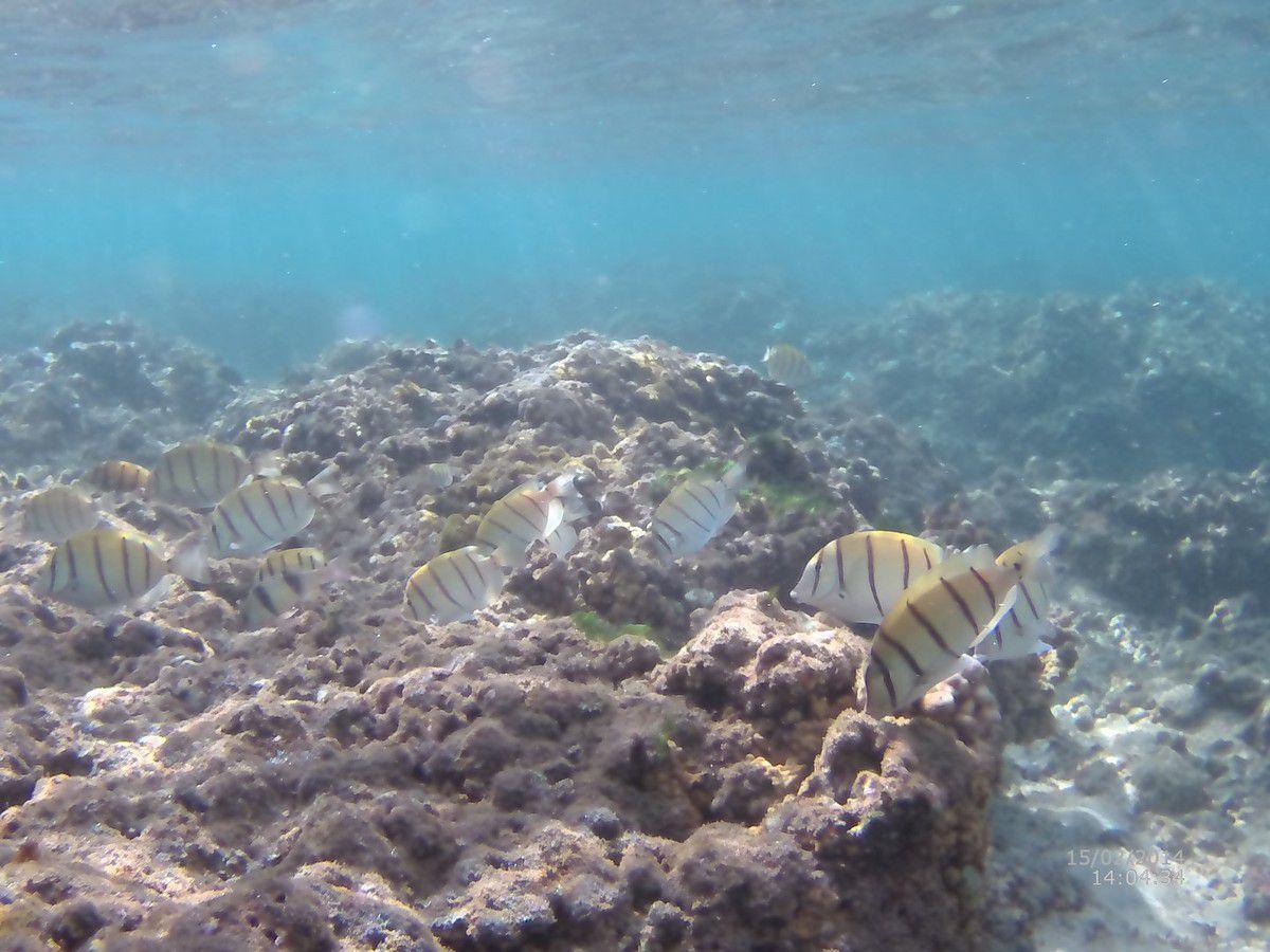 J10 - Sous l'eau