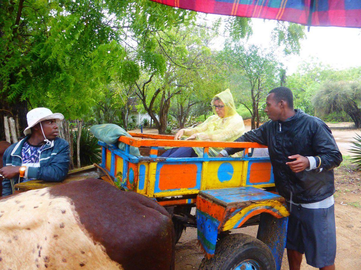 Jeudi 24 janvier 2019 - J39 - Ifaty, dernier jour ... toujours sous la pluie
