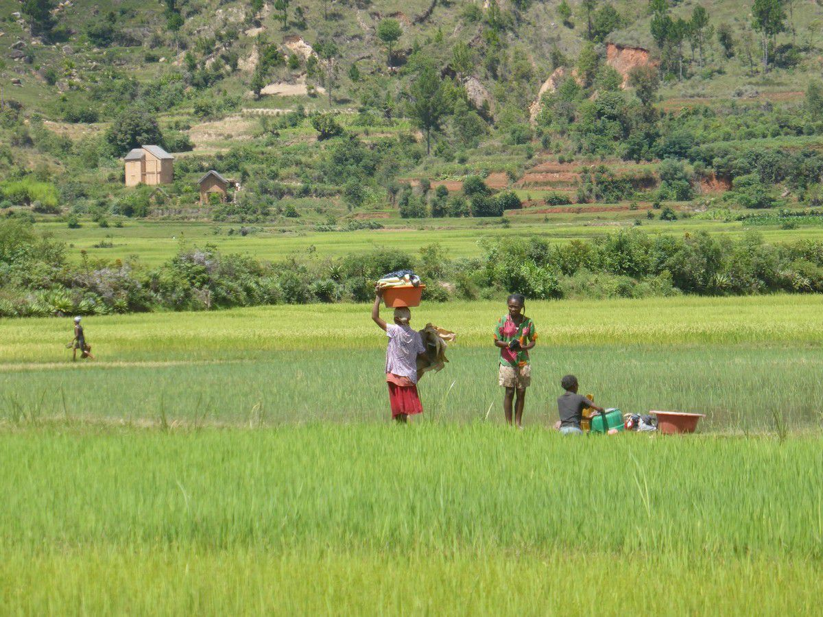 J28 - Antanabe, les rizières.