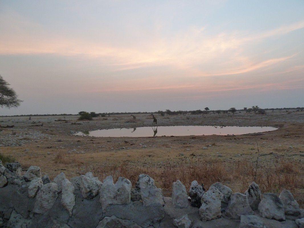 J23 – Samedi 4 août 2012 – Okaukuejo – Journée des Eléphants