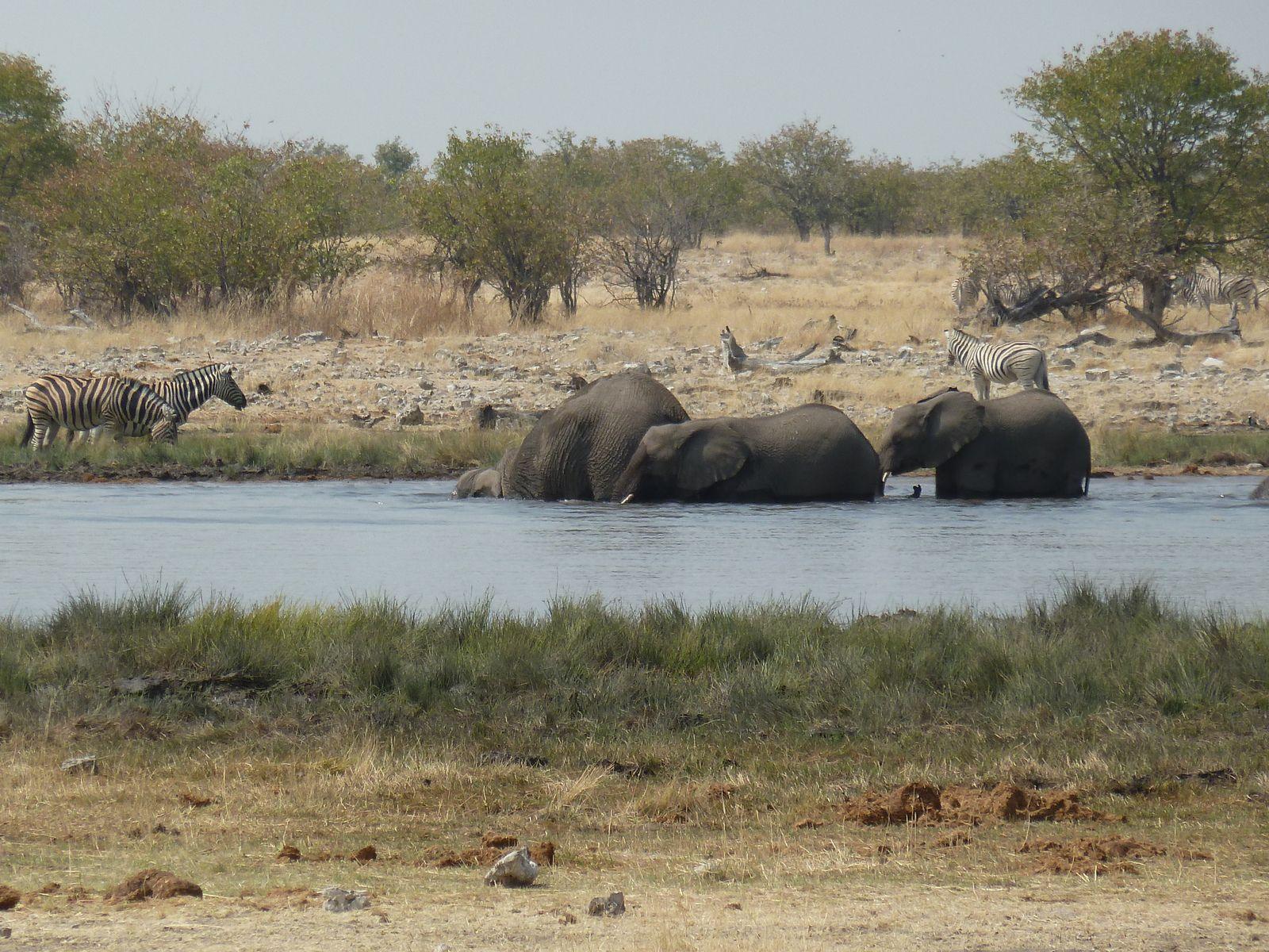 J24 – Dimanche 5 août 2012 – Halali – Le jour des lions …