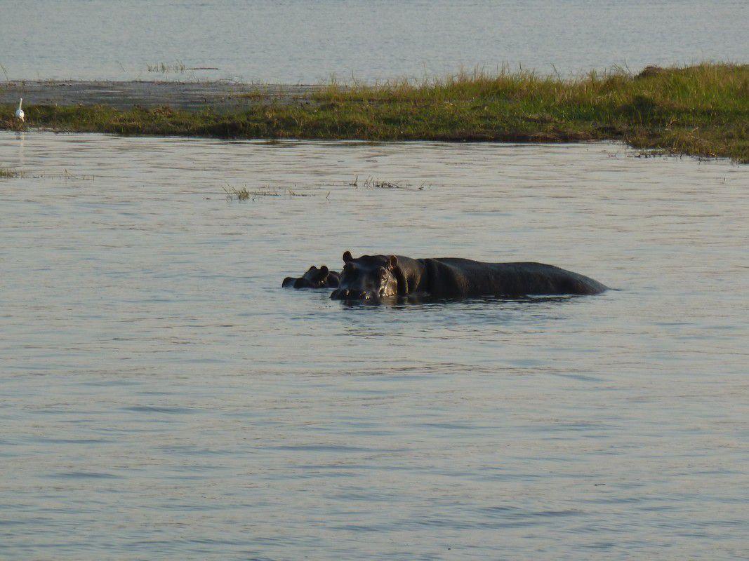 J30 – Samedi 11 août 2012 – Kasave - « Game cruise sur la Chobe River »