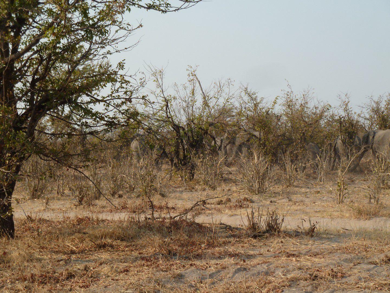 J34 – Mercredi 15 août 2012 – Linyanti – Quand Babar est en colère …