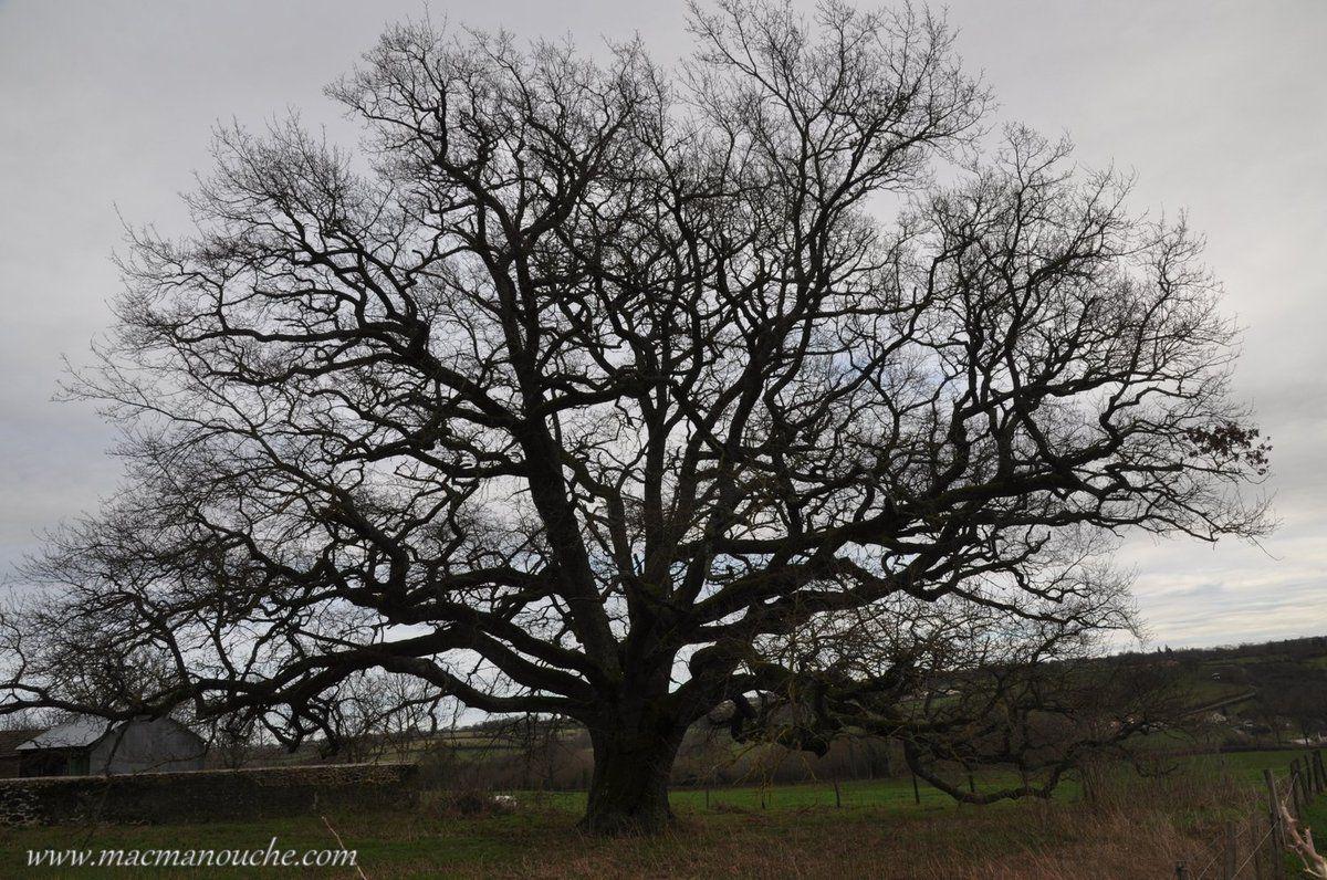 Sur le chemin du retour, cet arbre nous a plu.