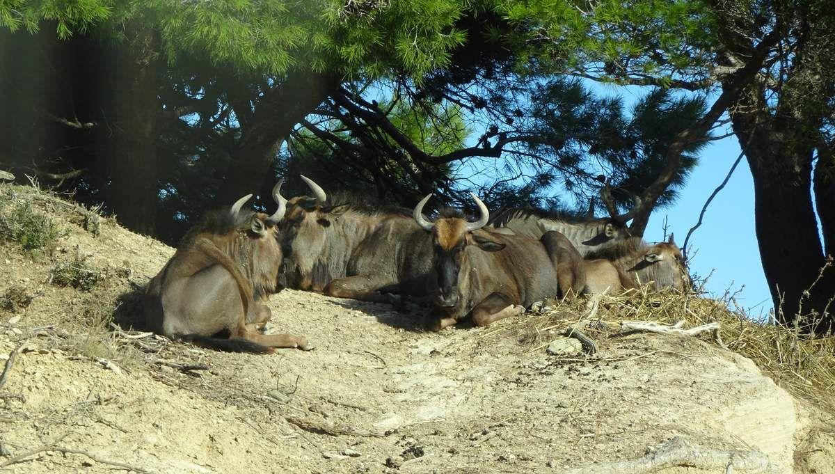De Narbonne à Perpignan : la réserve Africaine de Sigean