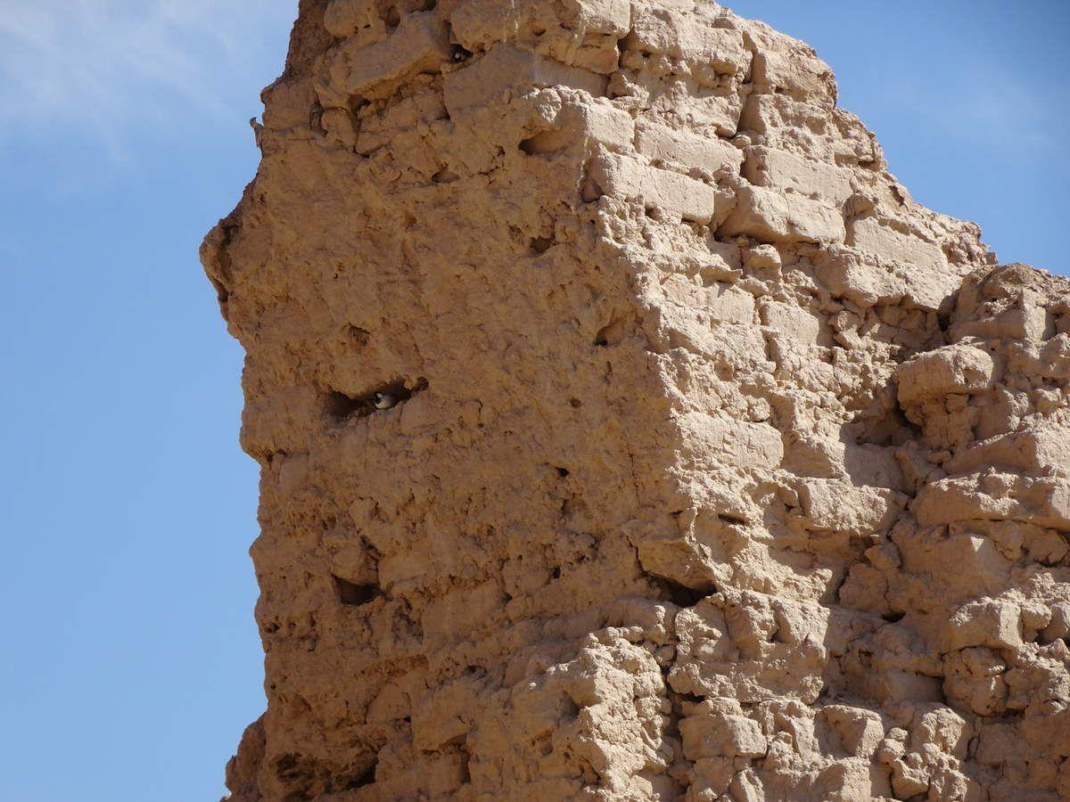 Le fleuve Amou Daria utilisé pour l'irrigation (notamment pour la culture du coton), ce qui a causé en grande partie l'assèchement de la mer d'Aral.