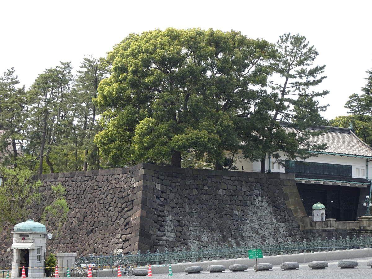 Tokyo 3ème jour : les jardins Impériaux-Ginza