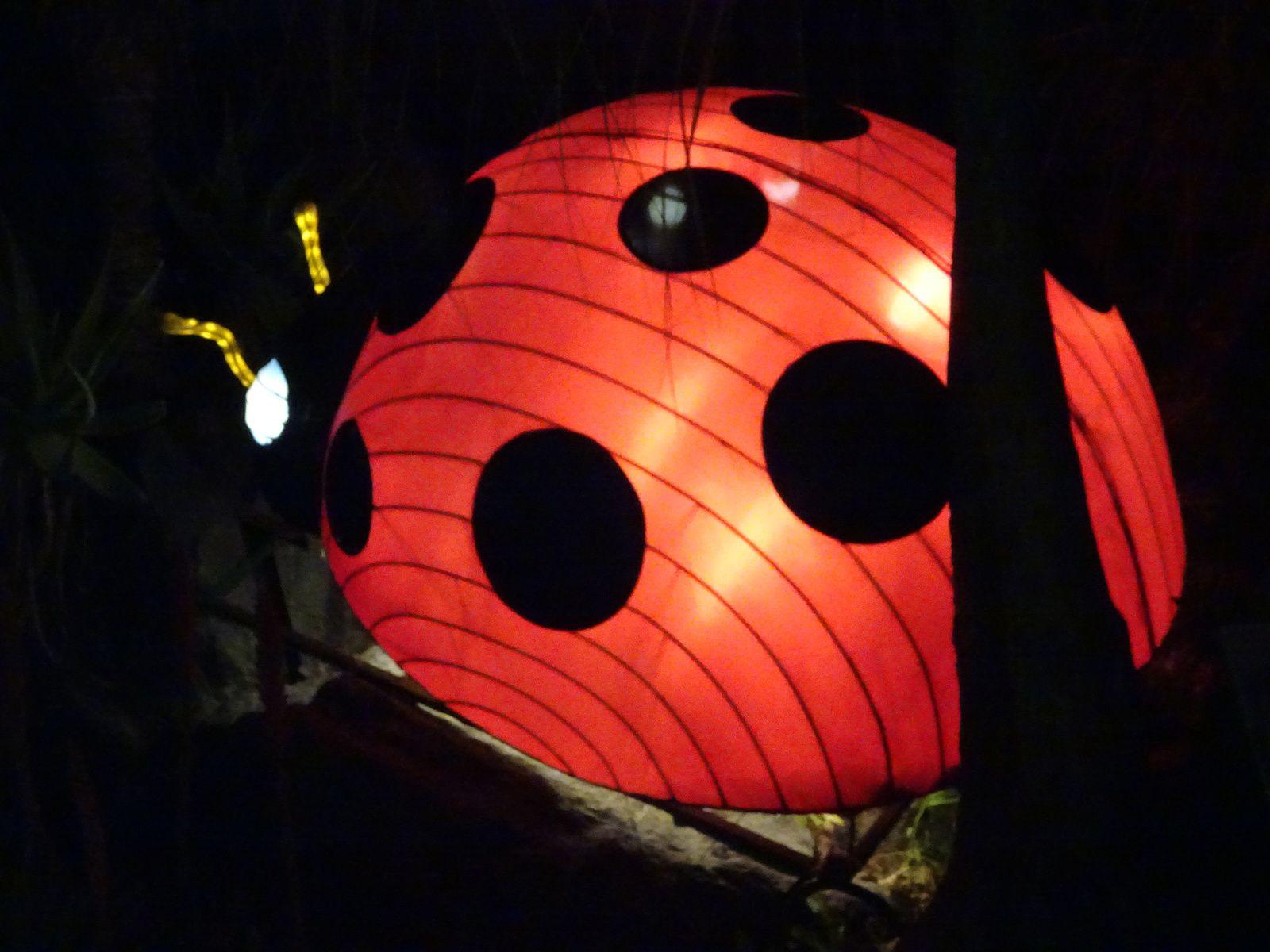 Nice :  un festival de lanternes chinoises