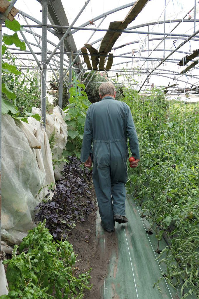 Gérard nous ouvre sa tomathèque