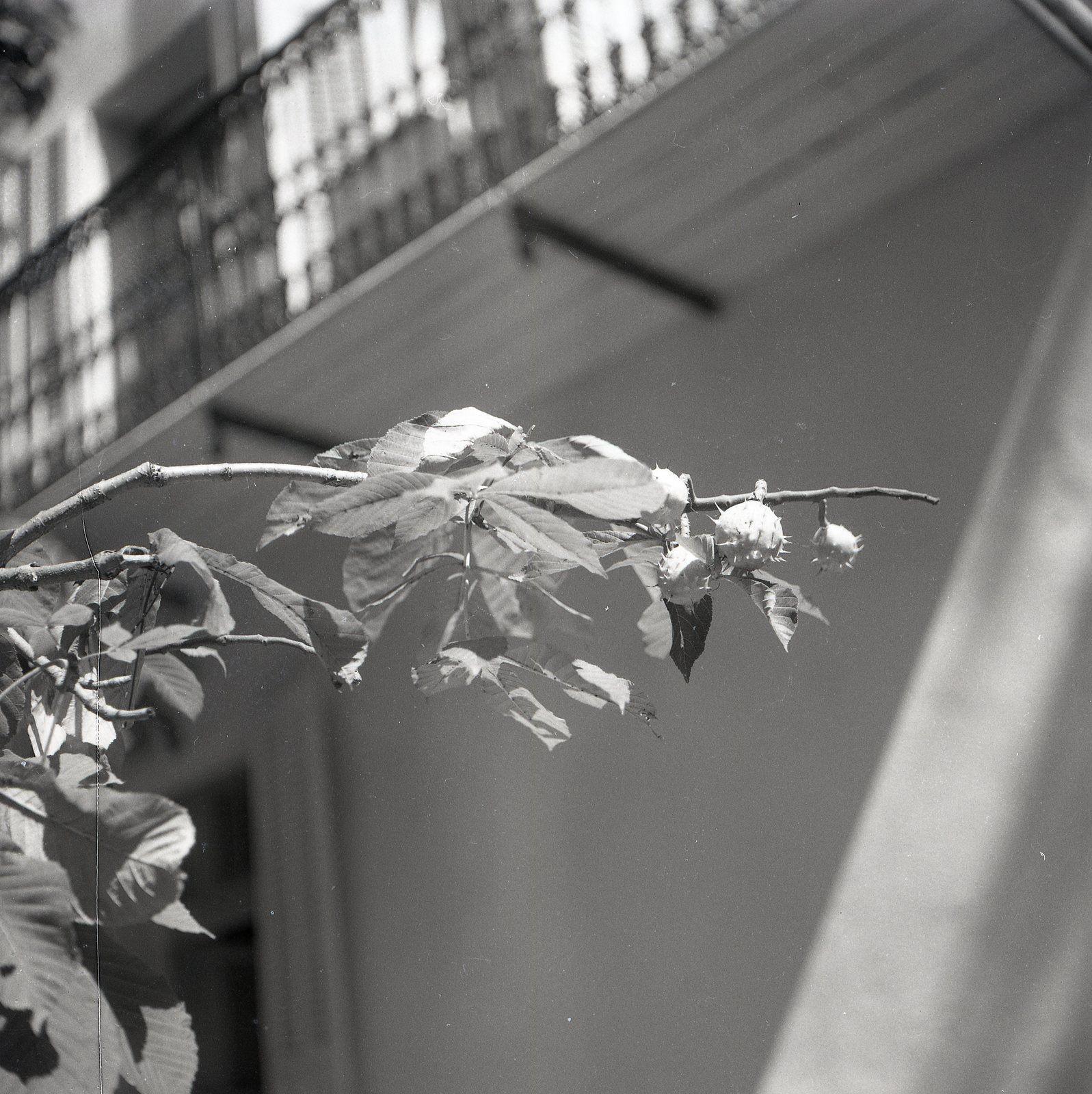 Dans l'arbre privé de fruits et de feuilles (Poème de Guillevic)