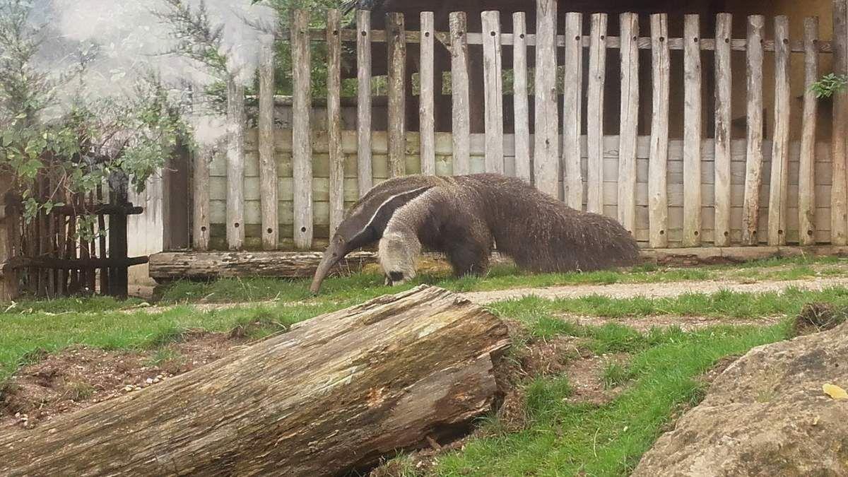 Zoo Amnéville 57