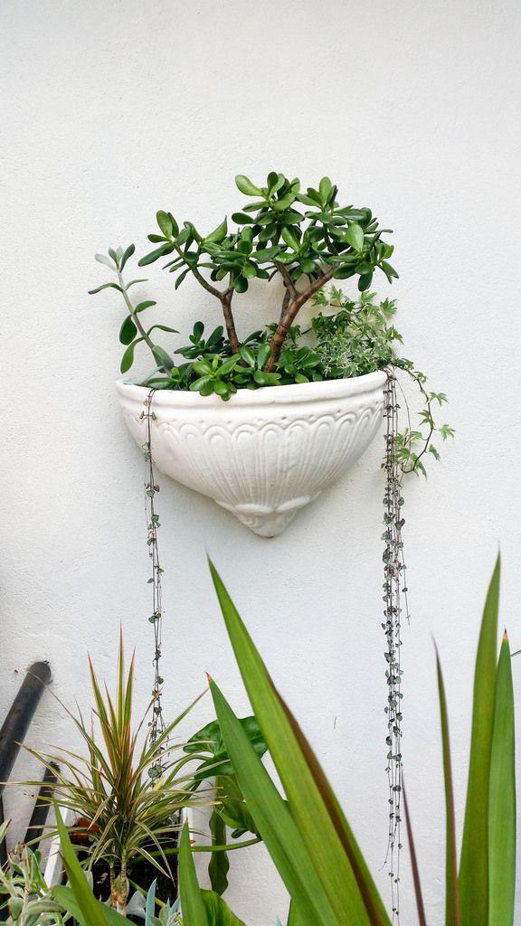 Jardin intérieur 1