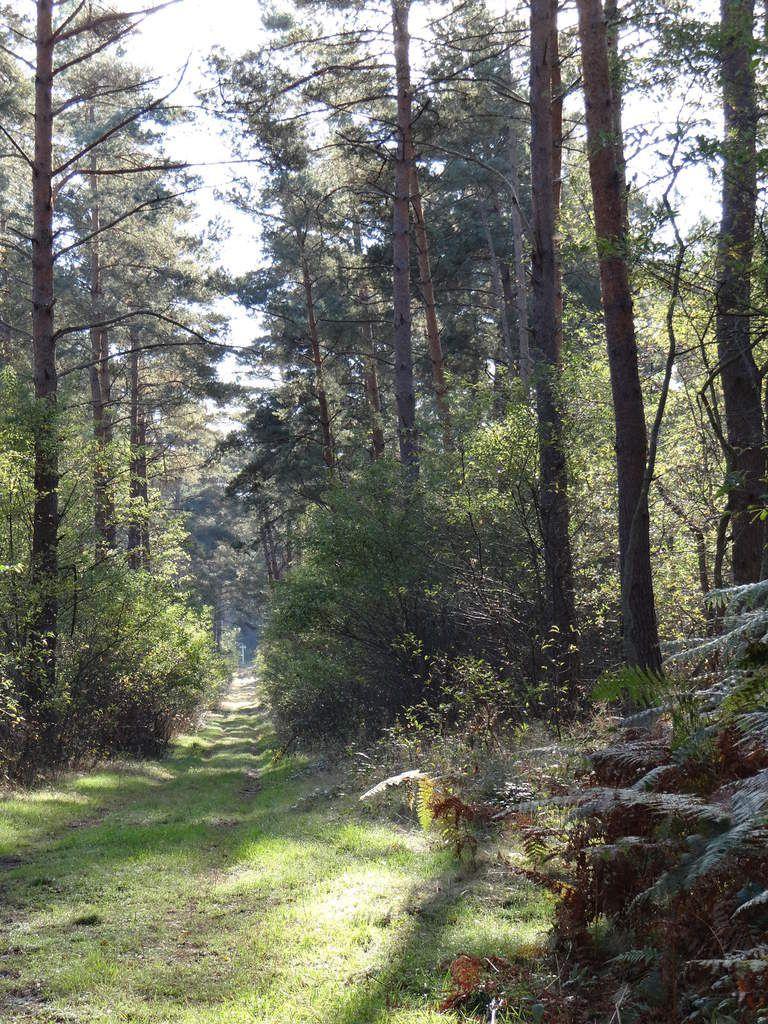 Marche en forêt de Compiègne