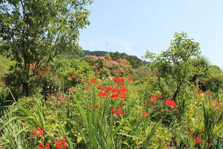 Giverny-les jardins de Claude Monnet